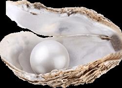 Стрида, чиито екстракт е елемент от състава на нашите хапчета за увеличение на мускулите и тестостерона.